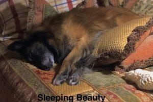 Sleep is the Cornerstone of Healthy Habits
